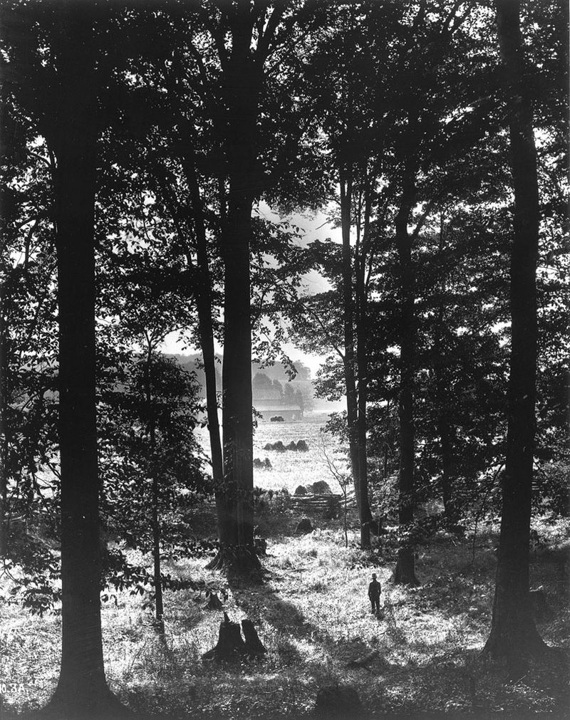 First Vision - Sacred Grove, by George Edward Anderson (1907)